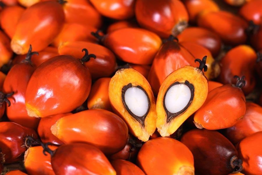 olio-palma-pe-labellers